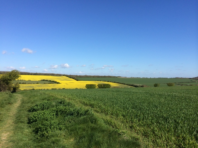 The yellow of the oilseed rape fields caught my eye on this morning's walk.