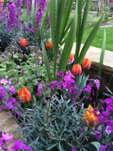 One of my favourite colour combinations in the garden green, purple and orange – a cheering sight.