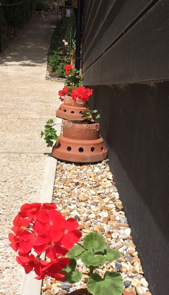 Cheery geraniums planted in our old chimney covers.