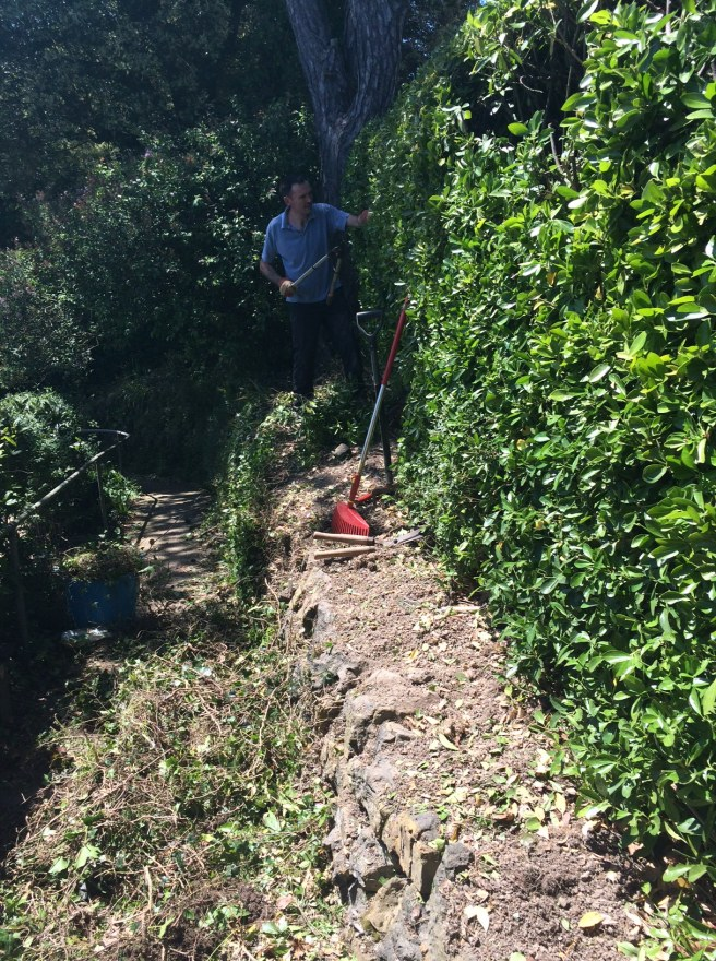 I should have taken a 'before' shot, ie, before the hedge was cut and the edge cleared, but David got going before me!