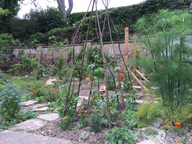 A view across the veg patch towards the back wall.