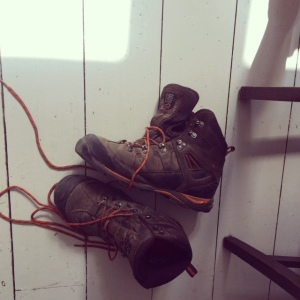 My son's discarded walking boots. I had to leave them for quite a while before it was safe to move them.