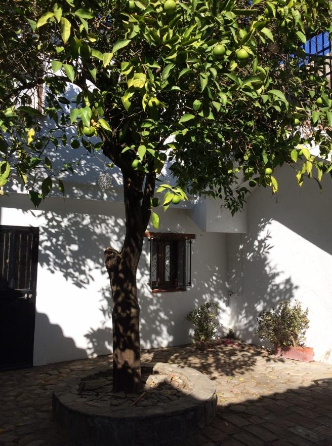 The orange-tree courtyard.