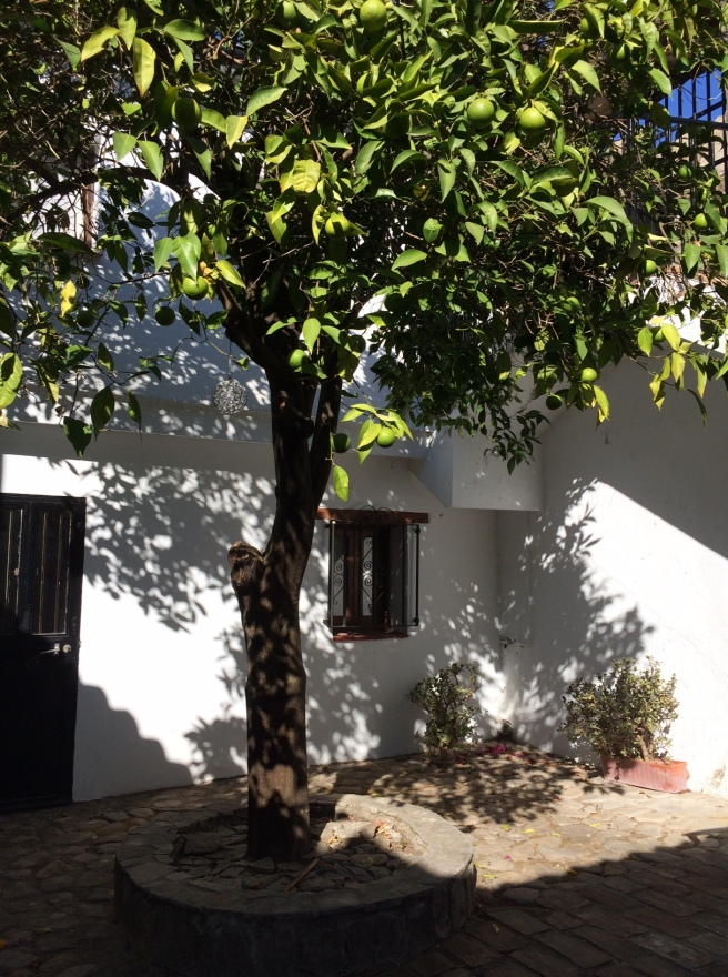 The orange-tree courtyard.