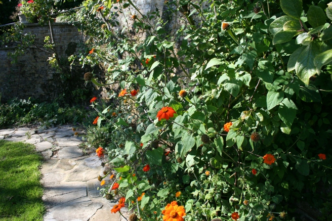 The border along the back wall needs a good weed and tidy but it's still colourful.
