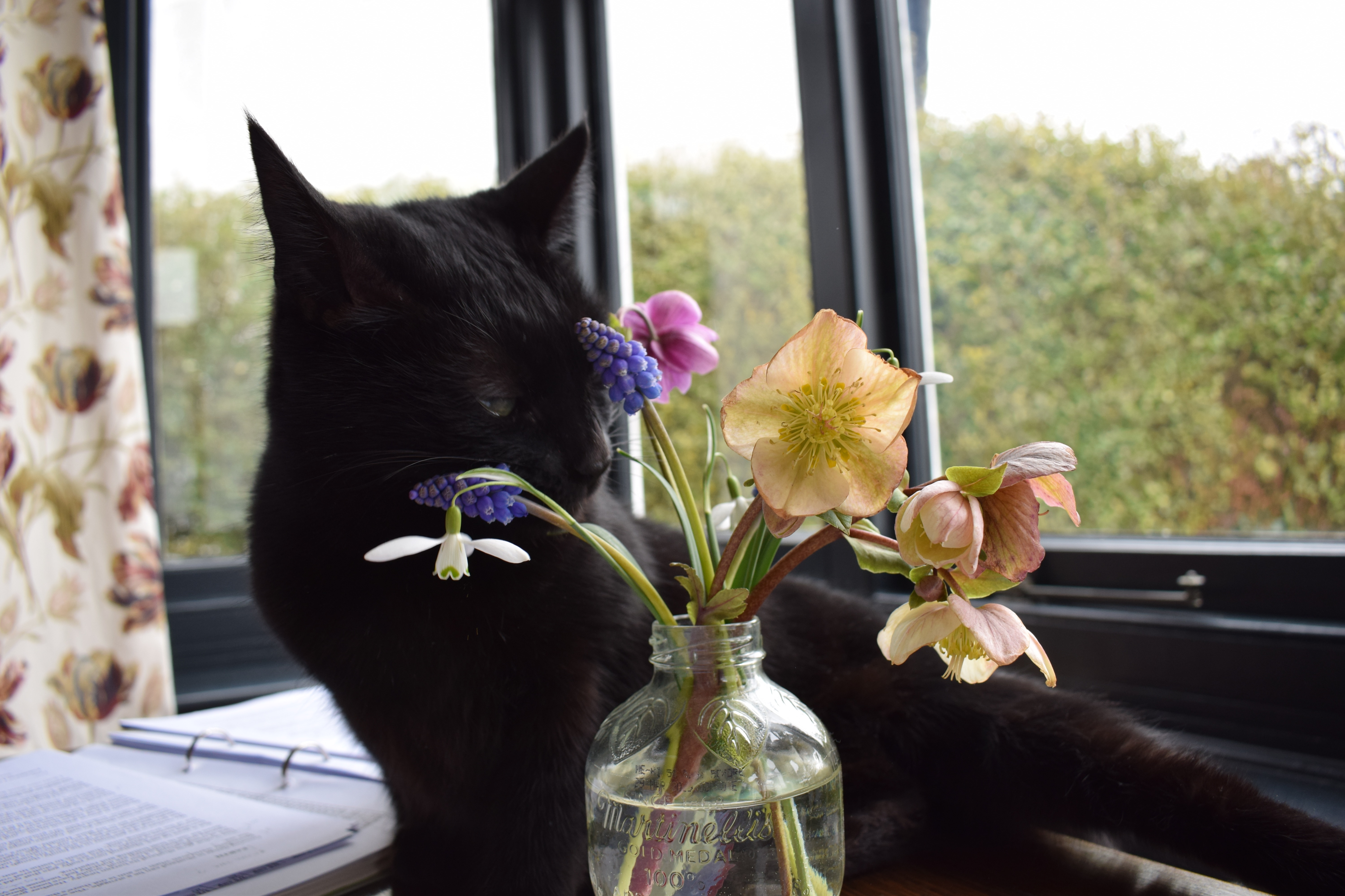 In a vase on monday survivors acoastalplot i shall be working hard at my desk admiring these blooms and trying to ignore a thoroughly fed up dog and a cat who likes to sit on my papers reviewsmspy