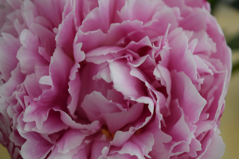 In A Vase On Monday Kitchen Flowers Acoastalplot