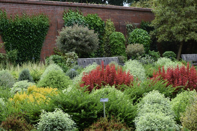 Evergreen shrubs for topiary